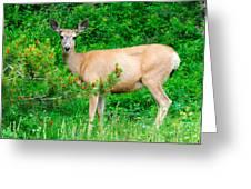 Wild Deer Greeting Card