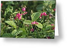 Wild Grass Flower Greeting Card
