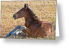 Wild Horse Foal Greeting Card