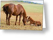 Wild Horse Mother And Foal Greeting Card