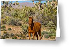 Wild Horse Of Joshua Tree Greeting Card