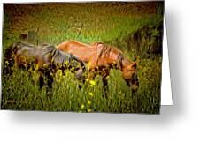 Wild Horses In California Series 2 Greeting Card