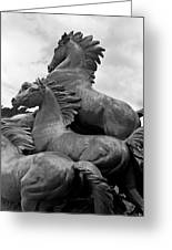 Wild Mustang Statue Greeting Card
