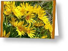 Wild Okanagan Sunflowers Greeting Card