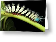 Wild Silk Moth Caterpillar (saturniidae Greeting Card