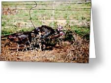 Wild Turkeys Greeting Card by Thea Wolff