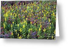 Wildflower Meadow Greeting Card