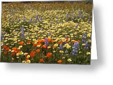 Wildflower Wonderland 9 Greeting Card