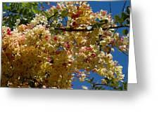Wilhelmina Tenney Rainbow Shower Tree Greeting Card