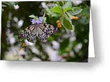 Wings Of Beauty Greeting Card