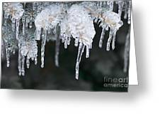 Winter Branches In Ice Greeting Card