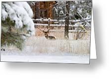 Winter Doe Greeting Card