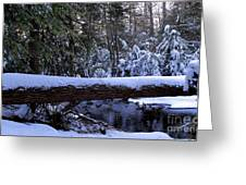 Winter Forest Stream Greeting Card