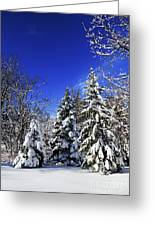 Winter Forest Under Snow Greeting Card