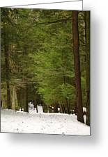 Winter Path Greeting Card by Andrea Dale