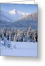 Winter Scenic Of Snowcovered Spruce Greeting Card