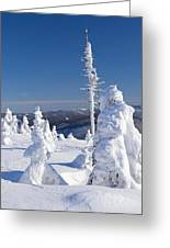 Winter View Of Snow Covered Trees Greeting Card