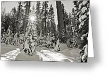 Winter Wonderland - Badger Pass In Yosemite National Park Greeting Card