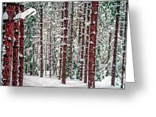 Winters Forest Greeting Card