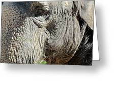 Wise One,elephant  Greeting Card