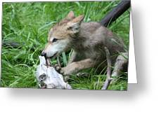 Wolf Pup Greeting Card