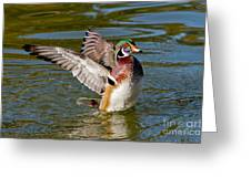 Wood Duck Drake Flapping Wings Greeting Card
