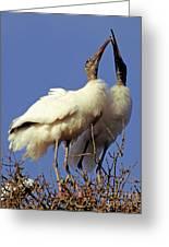 Wood Stork Courtship Display Greeting Card