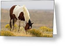 Wyoming Drifter Greeting Card