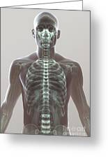 X-ray Skeleton Greeting Card