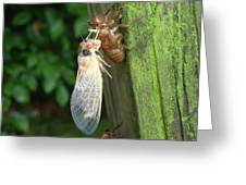 Year Of The Cicada Greeting Card