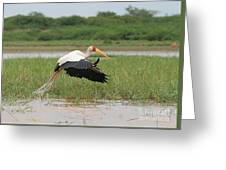 Yellow-billed Stork Mycteria Ibis Greeting Card