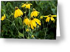 Yellow Cone Flowers Rudbeckia Greeting Card