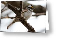 Yellow Crowned Sparrow Greeting Card