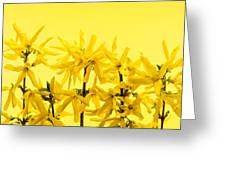 Yellow Forsythia Flowers Greeting Card