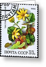Yellow Lesser Celandine Ranunculus Ficaria Greeting Card