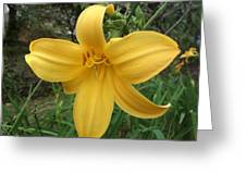 Yellow Lilly Flower Greeting Card