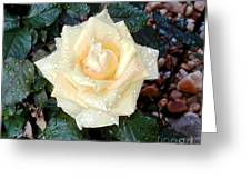 Yellow Rose At Dawn Greeting Card