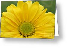 Yellow Softness Greeting Card