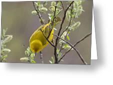 Yellow Warbler -1 Greeting Card