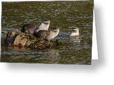 Yellowstone Otters Greeting Card