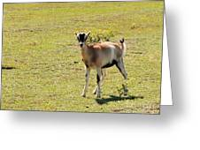 young Goat  Greeting Card
