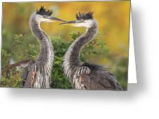 Young Herons Greeting Card