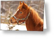 Young Horse In Winter Day Greeting Card