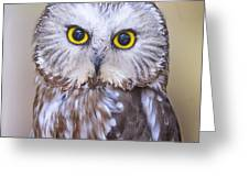 Young Saw-whet Owl Greeting Card
