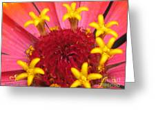Zinnia Named Swizzle Scarlet And Yellow Greeting Card