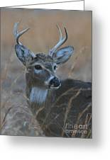 8 Point Buck Greeting Card