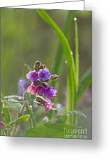 Common Lungwort Greeting Card