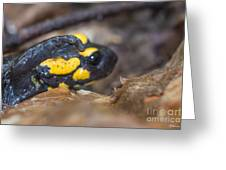 Fire Salamander Greeting Card