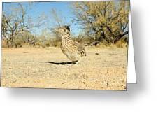 Greater Roadrunner Greeting Card