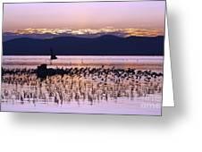 Mono Lake California Greeting Card by Jason O Watson